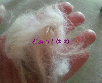 お毛毛がいっぱい!
