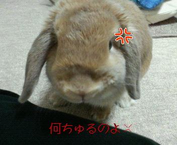 モコちゃん、ぷんぷん!