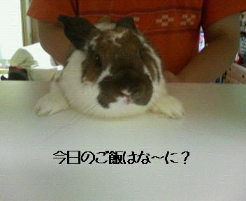 今日のご飯何?~