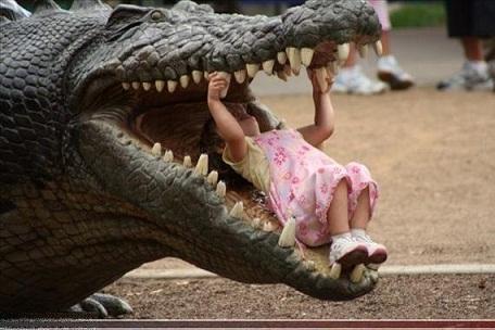 alligator2[]