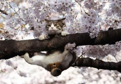 桜前立腺は何処にゃ