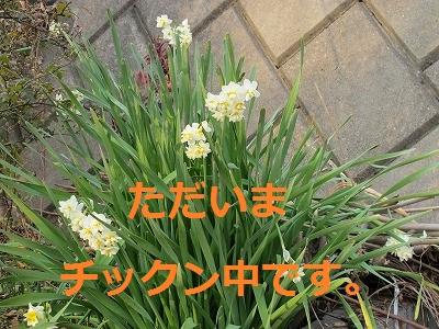 IMG_0366-s.jpg