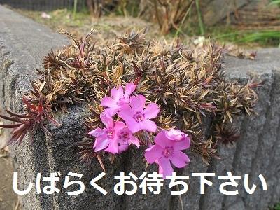 IMG_0367-s.jpg