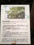 なんじゃもんじゃの木②(ダウンサイズ) H24/1/27