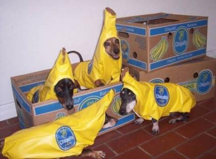 dog-costumes-004