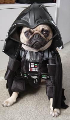 dog-costumes-006