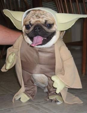 dog-costumes-014