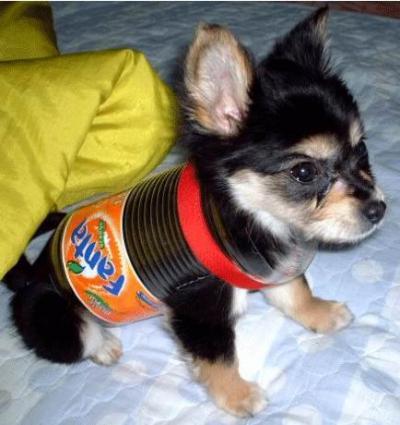 dog-costumes-019