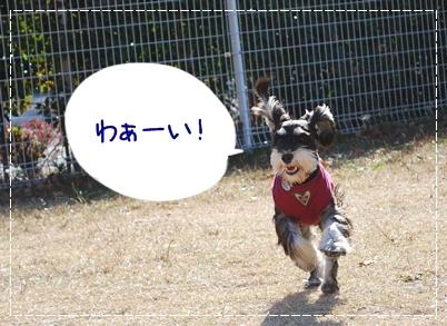 7_20111130221747.jpg