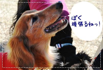 9_20111130222126.jpg