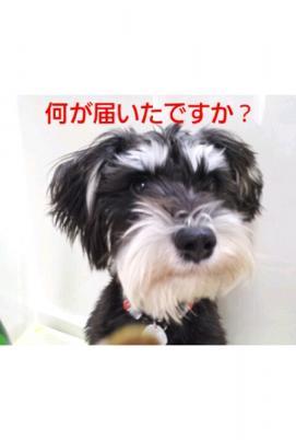 iphone_20120202041829.jpg