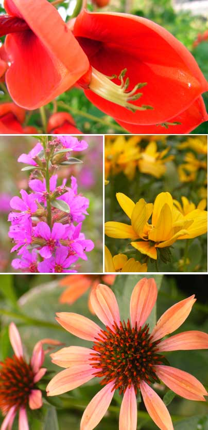 flower-namba-p.jpg