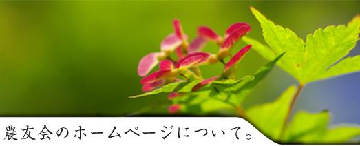 noyu.jpg