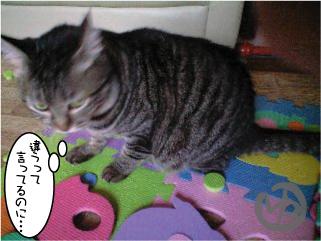 猫マンガ4
