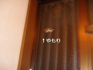 20060923190421.jpg