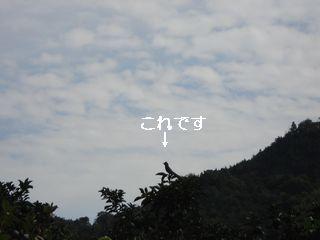 20061008172023.jpg