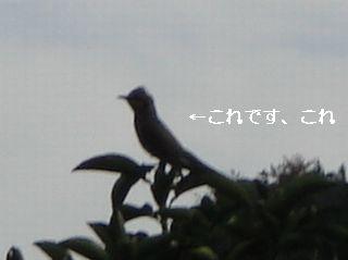20061008172159.jpg