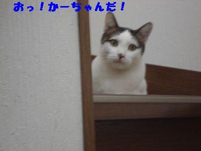 20071014211529.jpg