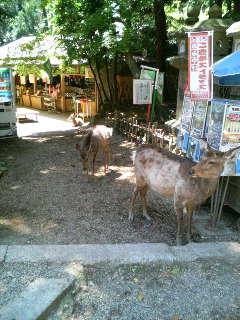 結構食欲旺盛な鹿サン