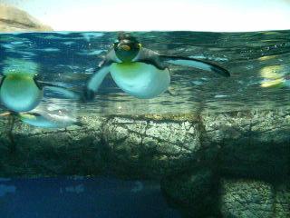 下から見たペンギンさん