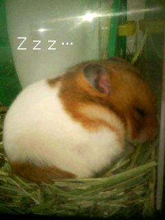 おやすみなり~ZZZ