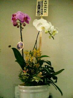 いいとも的お花