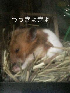 うきょきょ