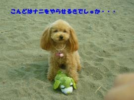 P1110297_20071010114007.jpg