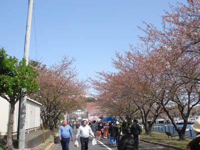 日米親善桜祭りin横須賀