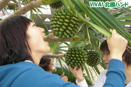 沖縄ならではの植物に興味津々