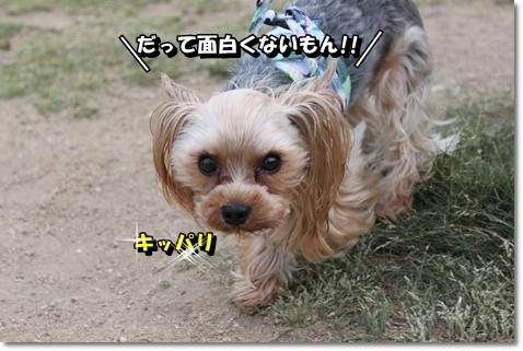 IMG_6446.jpg