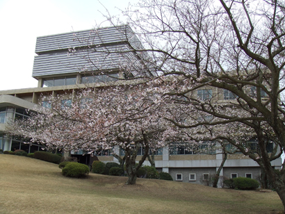 日本平ホテルの桜