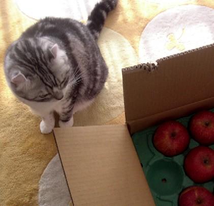 りんごだわ