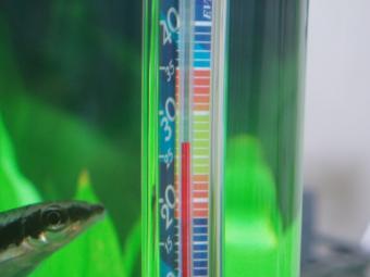 ファン稼動時の水温