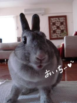 oichi-.jpg