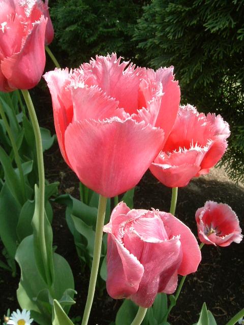 あしかがフラワーパーク ふじの花
