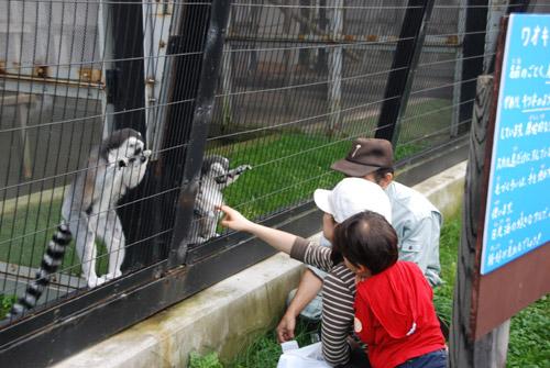 旭山動物園おさるさん