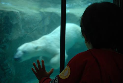 旭山動物園しろくま館