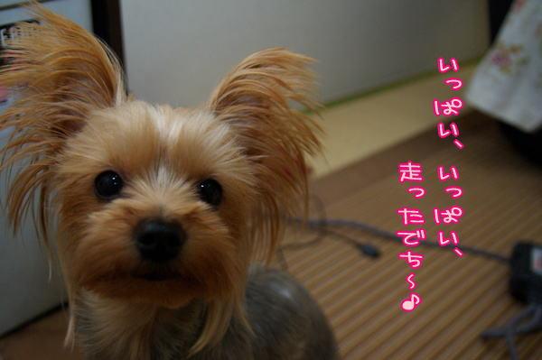 071130nouyui1.jpg