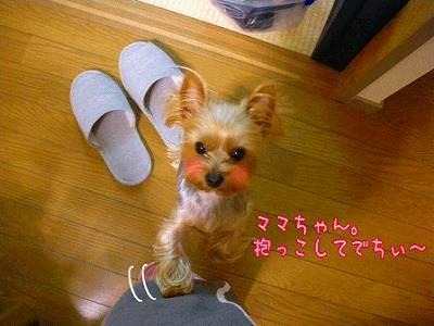 07410yui2.jpg
