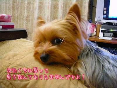07501yui2.jpg