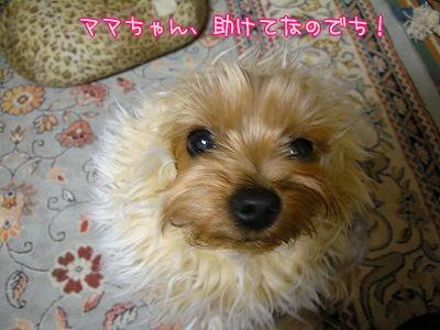 07506yui2.jpg