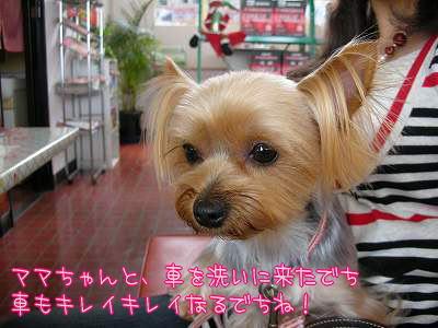07511yui1.jpg