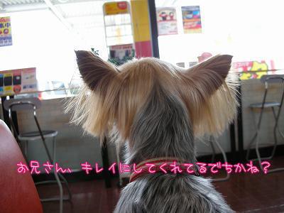 07511yui2.jpg