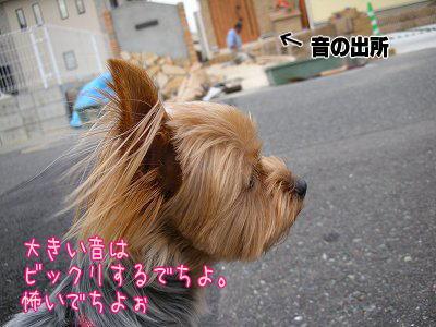 07525yui2.jpg