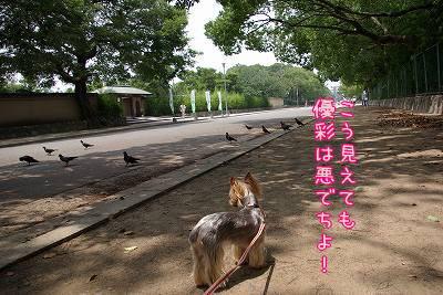 07625yuihato.jpg