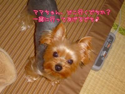 yuii07331.jpg