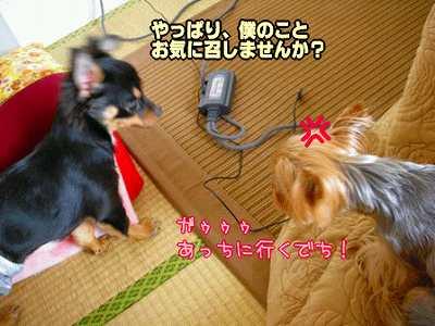 yuirenheya10747.jpg