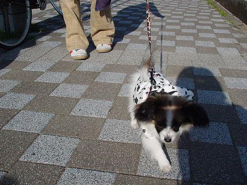 歩きましたよ~~(*^_^*)