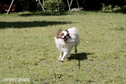 フィオ、走る。